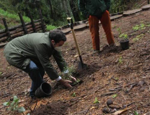 MINVU y Fundación Reforestemos firman nuevo convenio para recuperar los bosques nativos de la región